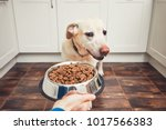domestic life with pet. feeding ... | Shutterstock . vector #1017566383