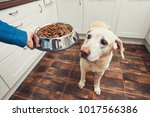domestic life with pet. feeding ... | Shutterstock . vector #1017566386