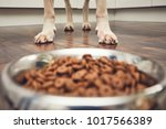 domestic life with pet. feeding ... | Shutterstock . vector #1017566389