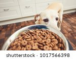 domestic life with pet. feeding ... | Shutterstock . vector #1017566398
