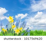 spring bluebells and daffodils... | Shutterstock . vector #1017569620