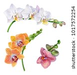 watercolor orchids. white  pink ... | Shutterstock . vector #1017572254