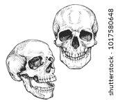 skull set  skeleton head... | Shutterstock .eps vector #1017580648