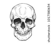 skull  skeleton head anatomy... | Shutterstock .eps vector #1017580654