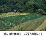 hill tribe villages and farm at ... | Shutterstock . vector #1017588148