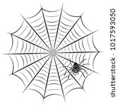 spider web and spider. vector... | Shutterstock .eps vector #1017593050