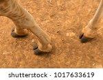 looking down at an endangered... | Shutterstock . vector #1017633619