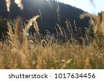 golden meadow in summer | Shutterstock . vector #1017634456