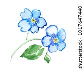 watercolor drawing of fresh... | Shutterstock . vector #1017647440