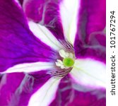 Macro Image Of Striped Purple...