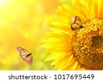 sunflower and monarch... | Shutterstock . vector #1017695449