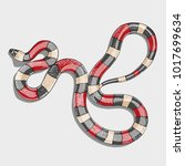 coral snake vector illustration ... | Shutterstock .eps vector #1017699634