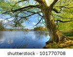 beech trees at spring near a... | Shutterstock . vector #101770708