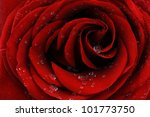 red rose with dew drops closeup | Shutterstock . vector #101773750