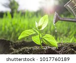 planting and watering seedlings  | Shutterstock . vector #1017760189