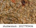 texture surface is a cracks...   Shutterstock . vector #1017795436
