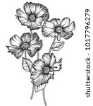 vector illustration of flowers... | Shutterstock .eps vector #1017796279