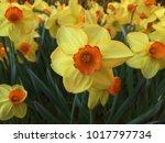 Experience The Floral Splendor...
