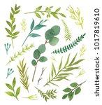 botanical illustration. set... | Shutterstock . vector #1017819610