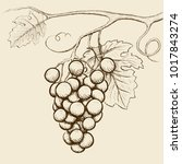 bunch of grapes with leaves.... | Shutterstock .eps vector #1017843274