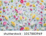 spring flowers collection...   Shutterstock . vector #1017883969