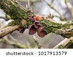 Edible Mushrooms Known As Wood...