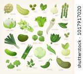 variety of green and white... | Shutterstock .eps vector #1017917020