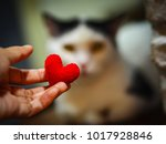 Stock photo red heart in hand cute cat blurred background for beautiful love 1017928846