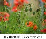 beautiful flower garden.   Shutterstock . vector #1017944044