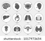 different flat human organs set ... | Shutterstock .eps vector #1017973654