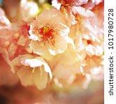 spring flowers. sakura | Shutterstock . vector #1017980728