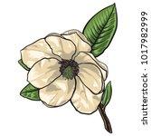 flower of quince tree vector.... | Shutterstock .eps vector #1017982999