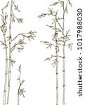 light bamboo grove. bamboo... | Shutterstock .eps vector #1017988030