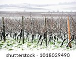 beautiful view of the vineyards ... | Shutterstock . vector #1018029490