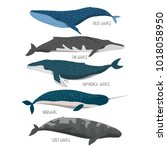 set of cute cartoon whales.... | Shutterstock .eps vector #1018058950