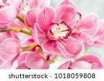 pink orchid flower on light... | Shutterstock . vector #1018059808