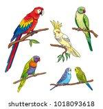 set of different parrots.... | Shutterstock .eps vector #1018093618