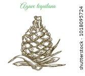 blue agave. plant for...   Shutterstock .eps vector #1018095724