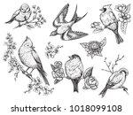 bird hand drawn set in vintage... | Shutterstock .eps vector #1018099108