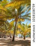 coconut palms on the ocean... | Shutterstock . vector #1018108759
