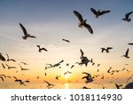 sunset at the seas and gulls.   Shutterstock . vector #1018114930