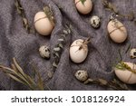 chicken and quails eggs with... | Shutterstock . vector #1018126924
