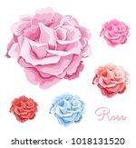 hand drawn rose open blossom... | Shutterstock .eps vector #1018131520