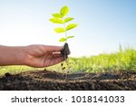 planting and watering seedlings ... | Shutterstock . vector #1018141033