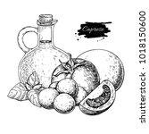 caprese salad ingredients.... | Shutterstock .eps vector #1018150600
