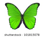 Macro Photo Of Green Butterfly...