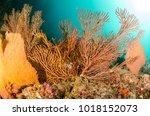 coral reef scenics of the sea... | Shutterstock . vector #1018152073