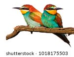 Small photo of amorous pair of birds on a white isolation , love and bright colors