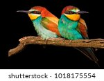 love couple in birds isolated... | Shutterstock . vector #1018175554