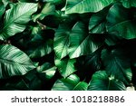 Beautiful Leaves Background Fo...